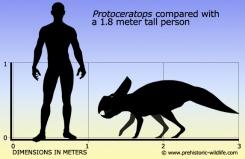 Source: www.prehistoric-wildlife.com